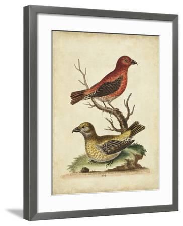 Edwards Cross Bills-George Edwards-Framed Art Print