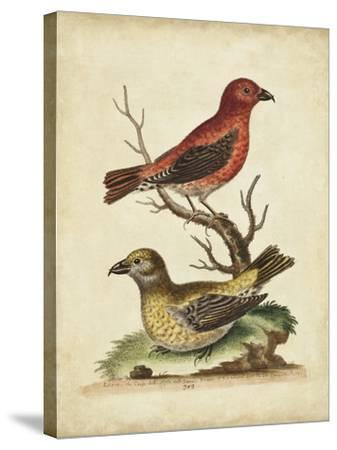 Edwards Cross Bills-George Edwards-Stretched Canvas Print