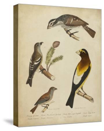 Bonapart Birds IV-Charles L^ Bonapart-Stretched Canvas Print