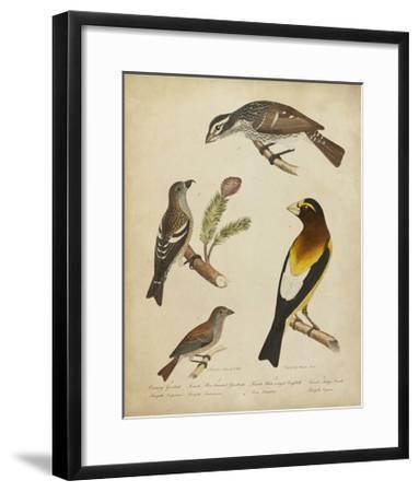 Bonapart Birds IV-Charles L^ Bonapart-Framed Art Print