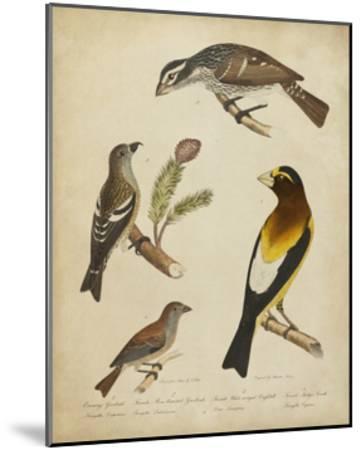 Bonapart Birds IV-Charles L^ Bonapart-Mounted Art Print