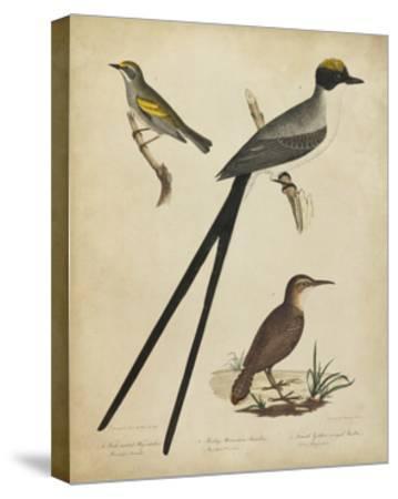 Bonapart Birds III-Charles L^ Bonapart-Stretched Canvas Print