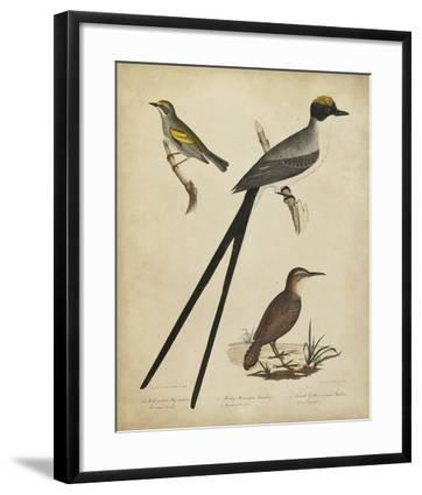 Bonapart Birds III-Charles L^ Bonapart-Framed Art Print