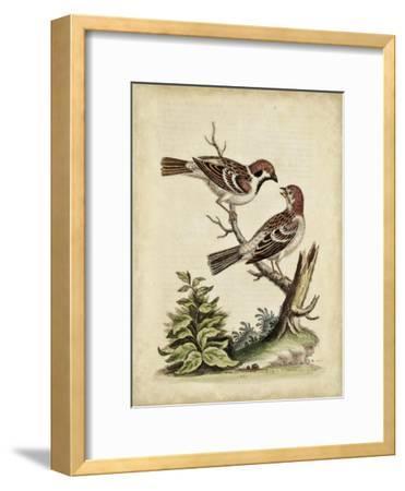 Edwards Bird Pairs VI-George Edwards-Framed Art Print
