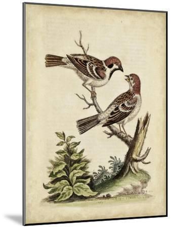 Edwards Bird Pairs VI-George Edwards-Mounted Art Print