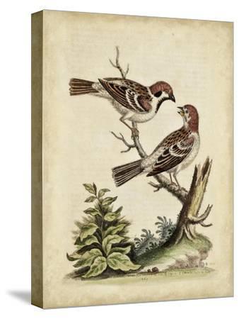 Edwards Bird Pairs VI-George Edwards-Stretched Canvas Print