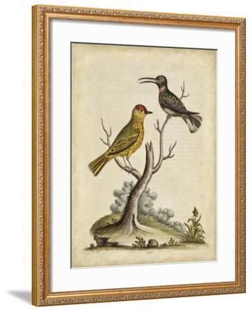 Edwards Bird Pairs IV-George Edwards-Framed Art Print
