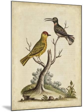 Edwards Bird Pairs IV-George Edwards-Mounted Art Print
