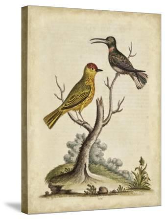 Edwards Bird Pairs IV-George Edwards-Stretched Canvas Print
