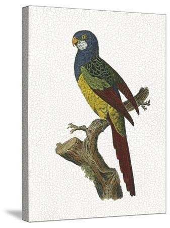 Crackled Antique Parrot IV-George Shaw-Stretched Canvas Print