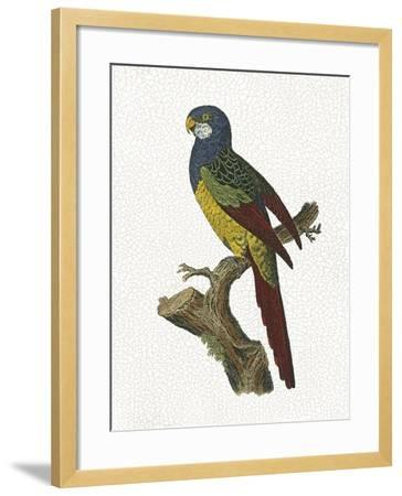 Crackled Antique Parrot IV-George Shaw-Framed Art Print