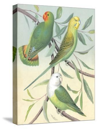 Cassell's Parakeets I-Cassell-Stretched Canvas Print