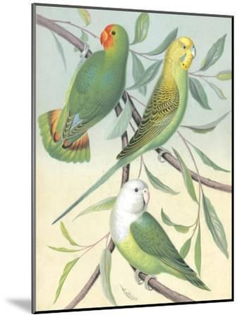 Cassell's Parakeets I-Cassell-Mounted Art Print
