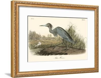 Blue Heron-John James Audubon-Framed Art Print