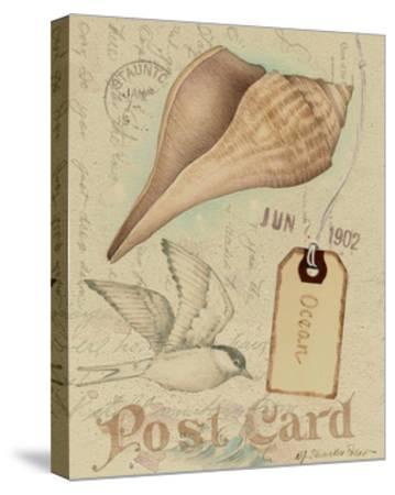 Postcard Shells IV-NancyShumaker Pallan-Stretched Canvas Print