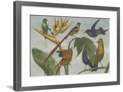 Exotic Bird III--Framed Art Print