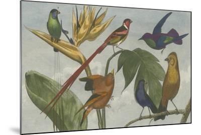 Exotic Bird III--Mounted Art Print