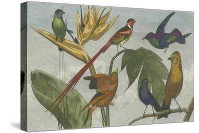 Exotic Bird III--Stretched Canvas Print