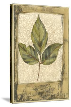 Small Spring Foliage II-Jennifer Goldberger-Stretched Canvas Print