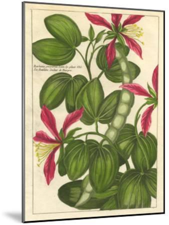 Fleur De Rouge VI--Mounted Art Print