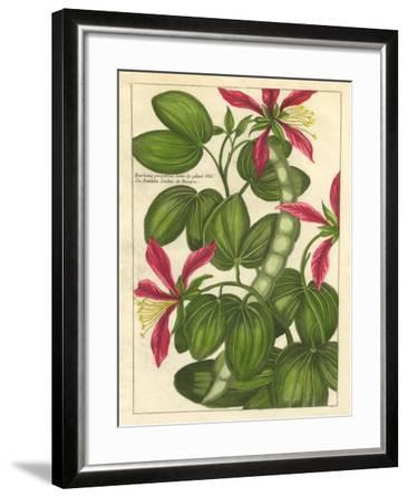 Fleur De Rouge VI--Framed Art Print