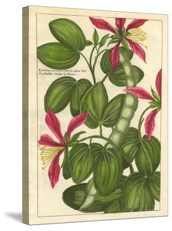 Fleur De Rouge VI--Stretched Canvas Print