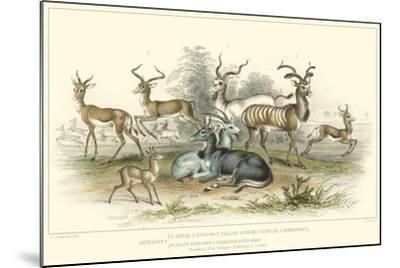 Antelope Varieties-J. Stewart-Mounted Art Print