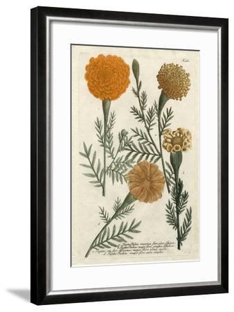 Marigold Magic II-Weinmann-Framed Art Print