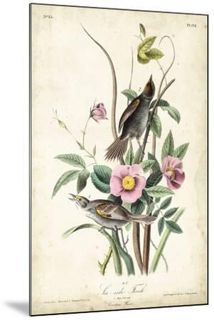 Seaside Finch-John James Audubon-Mounted Art Print