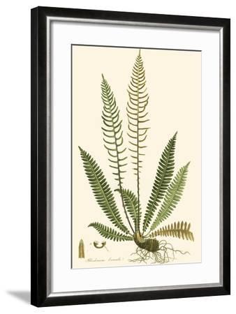 Curtis Ferns III-Curtis-Framed Art Print