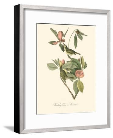 Audubon's Vireo-John James Audubon-Framed Art Print