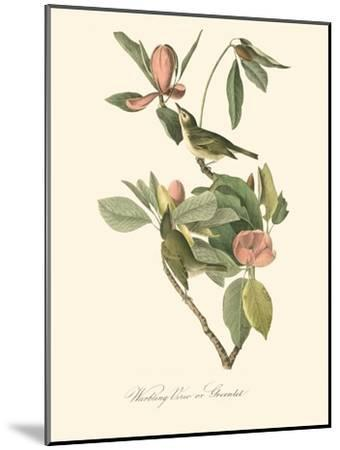 Audubon's Vireo-John James Audubon-Mounted Art Print