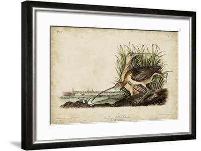 Long-billed Curlew-John James Audubon-Framed Art Print