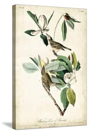 Warbling Vireo-John James Audubon-Stretched Canvas Print