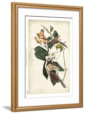 Black-billed Cuckoo-John James Audubon-Framed Art Print