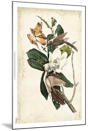 Black-billed Cuckoo-John James Audubon-Mounted Art Print