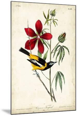 Audubon Bird & Botanical I-John James Audubon-Mounted Art Print