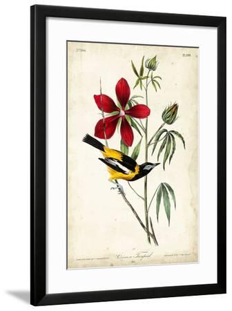 Audubon Bird & Botanical I-John James Audubon-Framed Art Print