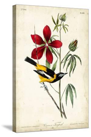 Audubon Bird & Botanical I-John James Audubon-Stretched Canvas Print