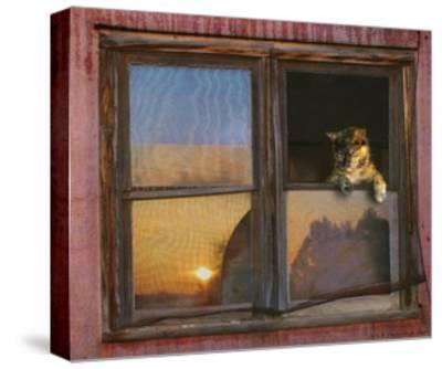 Kitten Window-Chris Vest-Stretched Canvas Print