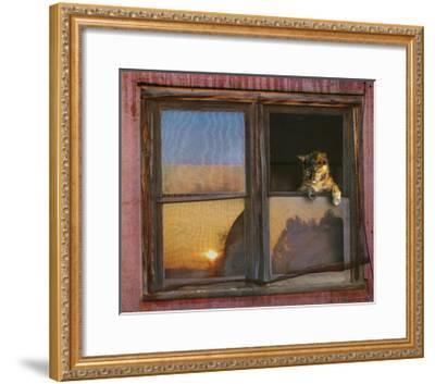 Kitten Window-Chris Vest-Framed Art Print