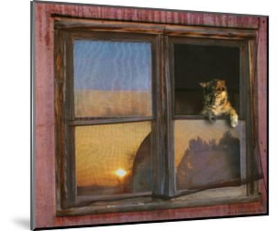 Kitten Window-Chris Vest-Mounted Art Print