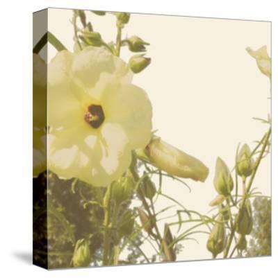 Vintage Bloom III-Megan Meagher-Stretched Canvas Print