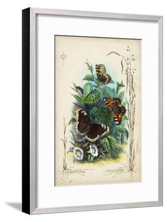 Victorian Butterfly Garden IV-Vision Studio-Framed Art Print