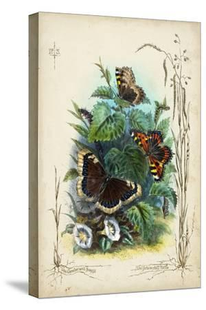 Victorian Butterfly Garden IV-Vision Studio-Stretched Canvas Print