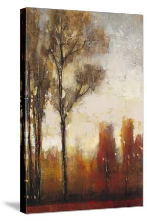 Tall Trees II-Tim O'toole-Stretched Canvas Print
