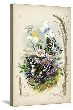 Victorian Butterfly Garden V-Vision Studio-Stretched Canvas Print