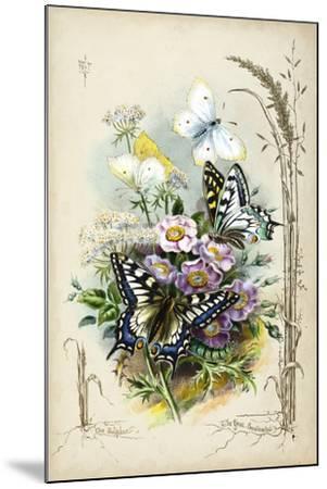 Victorian Butterfly Garden V-Vision Studio-Mounted Art Print