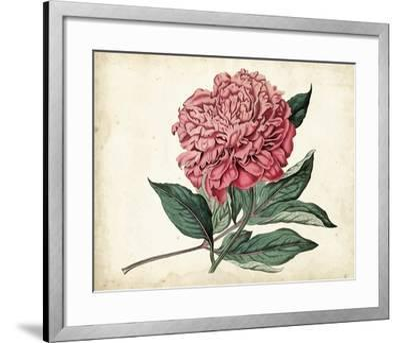 Peony Garden II-Curtis-Framed Art Print