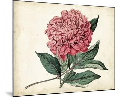 Peony Garden II-Curtis-Mounted Art Print